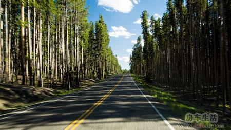 房车世界 房车生活 > 美国房车旅行日记(七)     路边有大片的枯木,是